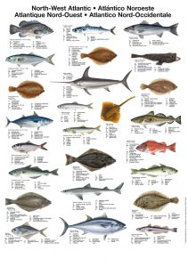 fish-poster
